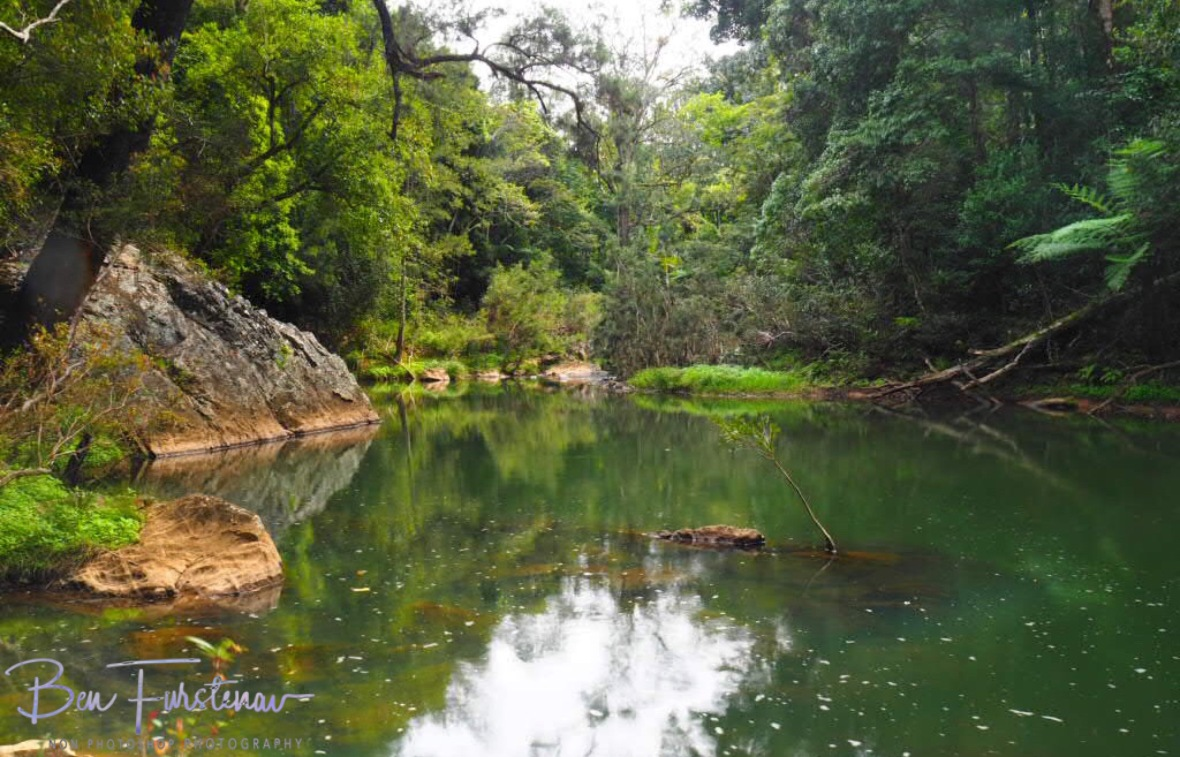 Perfect habitat for platypus at Eungalla National Park, Queensland, Australia