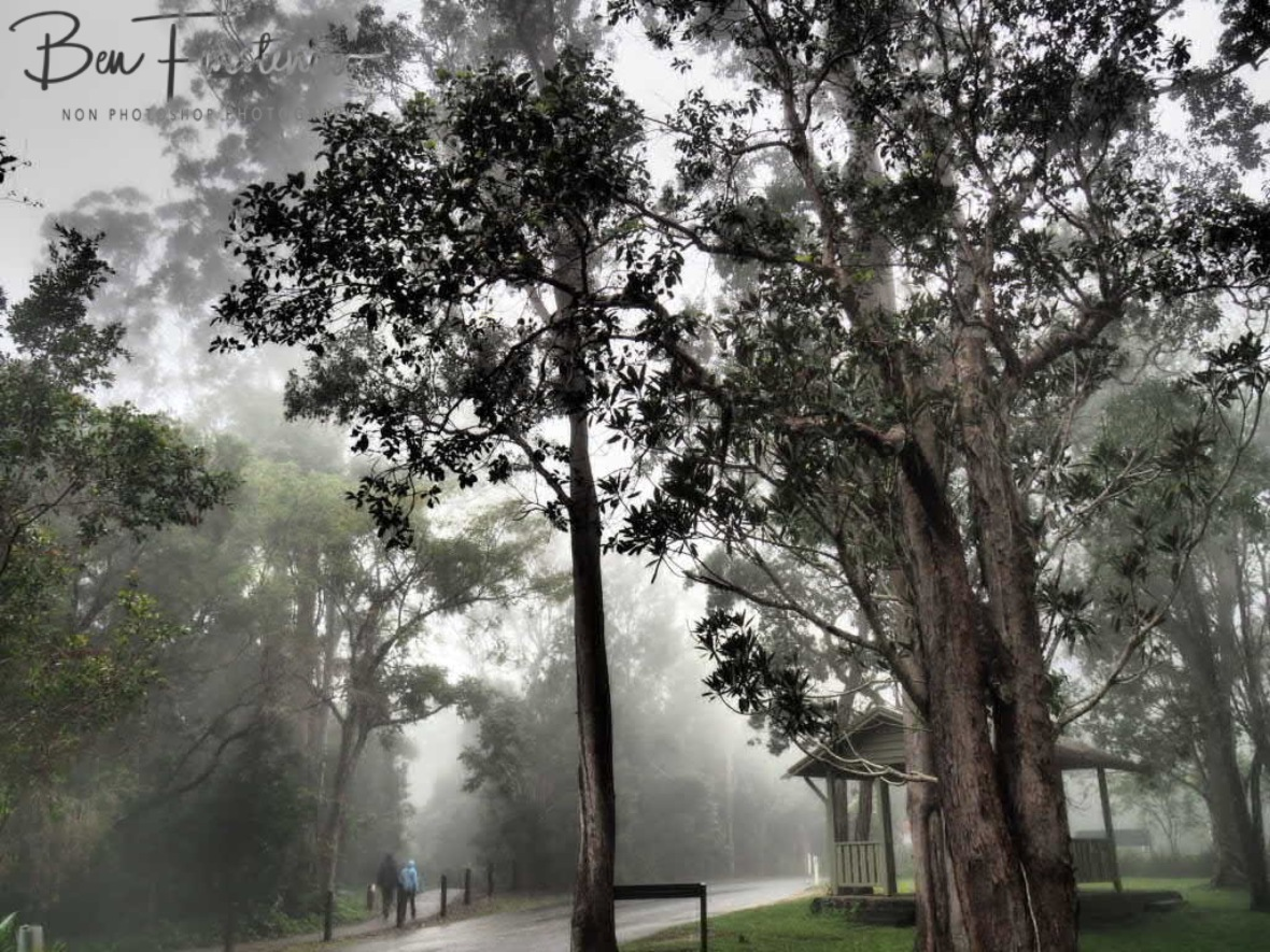 Disappearing in the mist at Eungalla National Park, Queensland, Australia