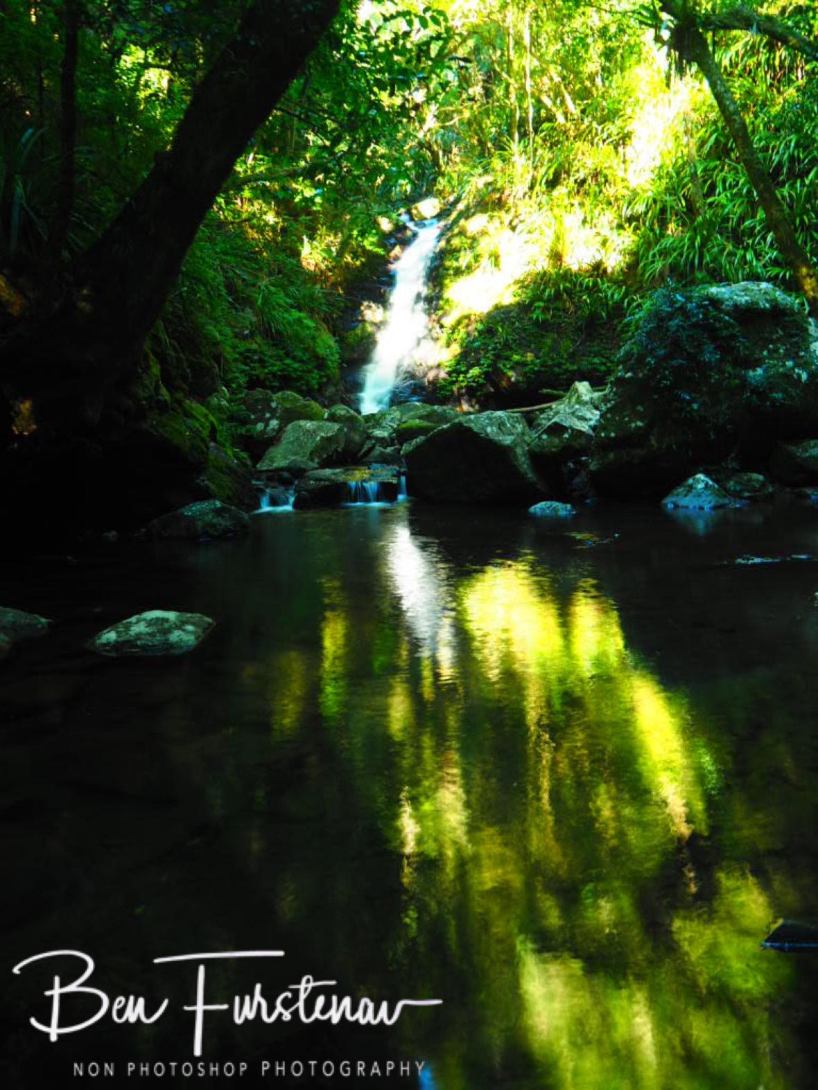 Golden reflections at Lamington National Park, Queensland, Australia