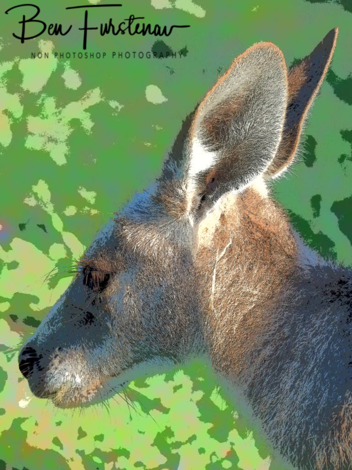 Kangaroo painting, Woody Head, New South Wales, Australia
