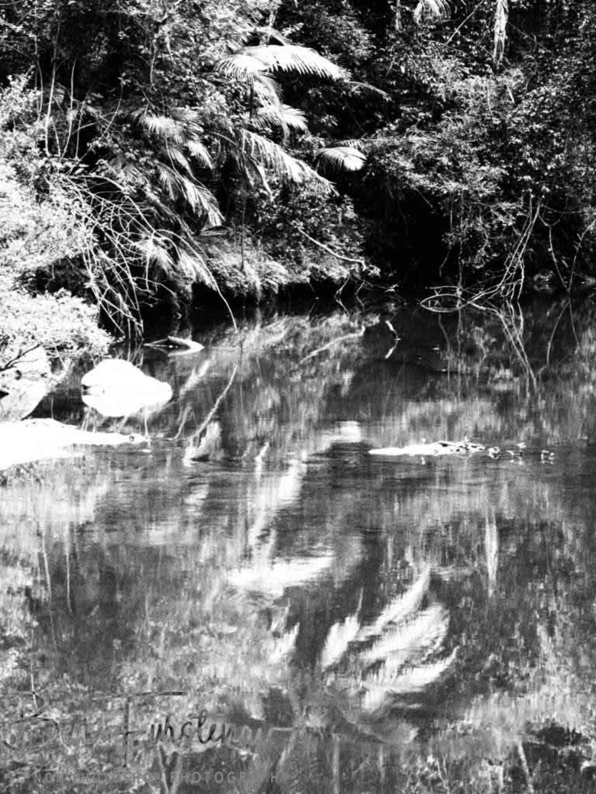Stunning reflections in black and white at Eungalla National Park, Queensland, Australia