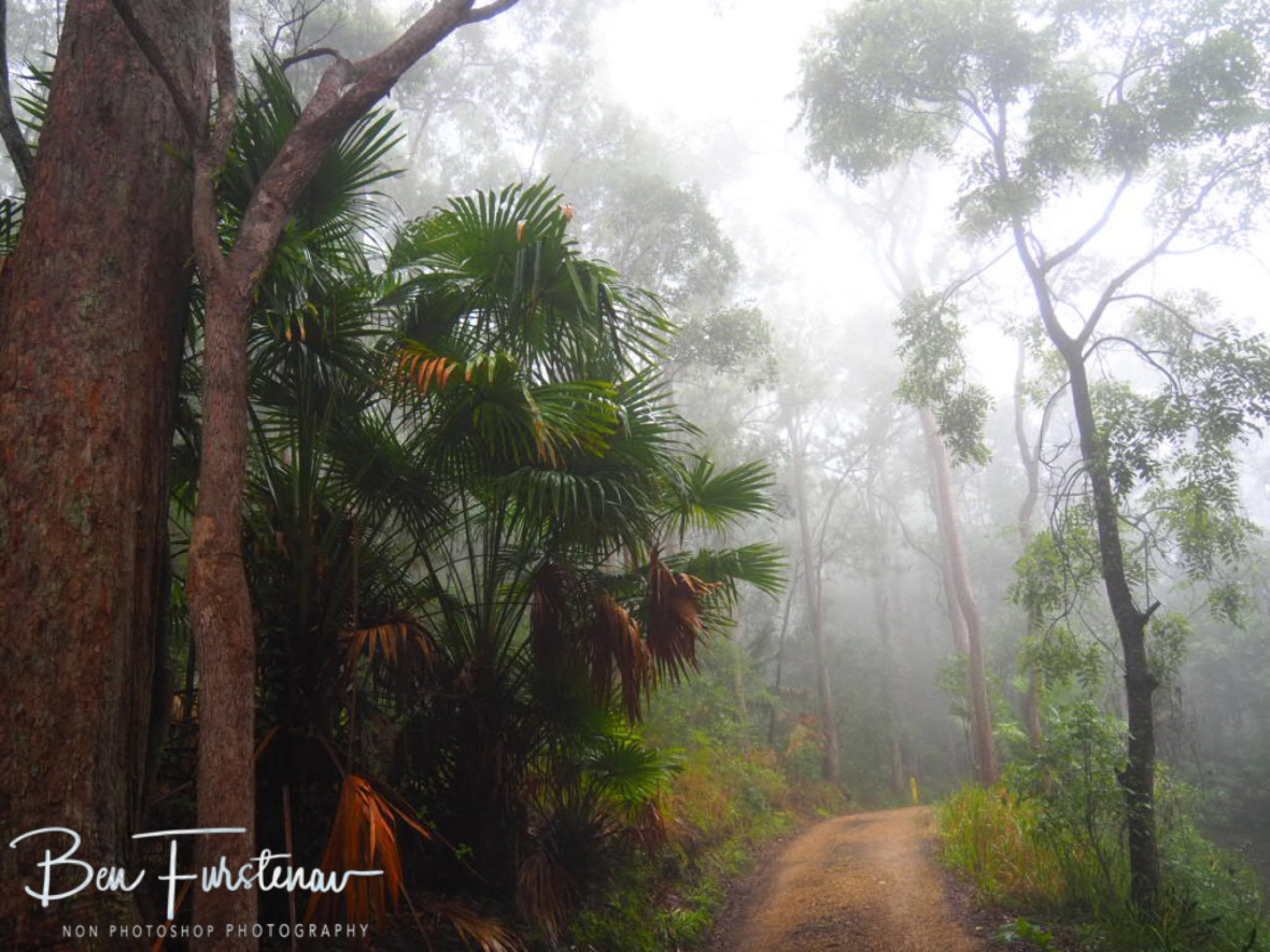 Tall 'Fern Flat Campground' at Eungalla National Park, Queensland, Australia