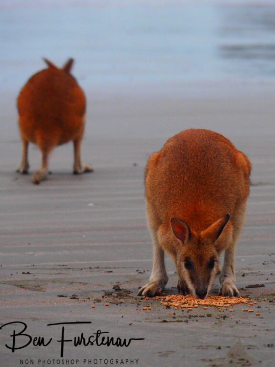 Mirror image at Cape Hillsborough, Queensland, Australia