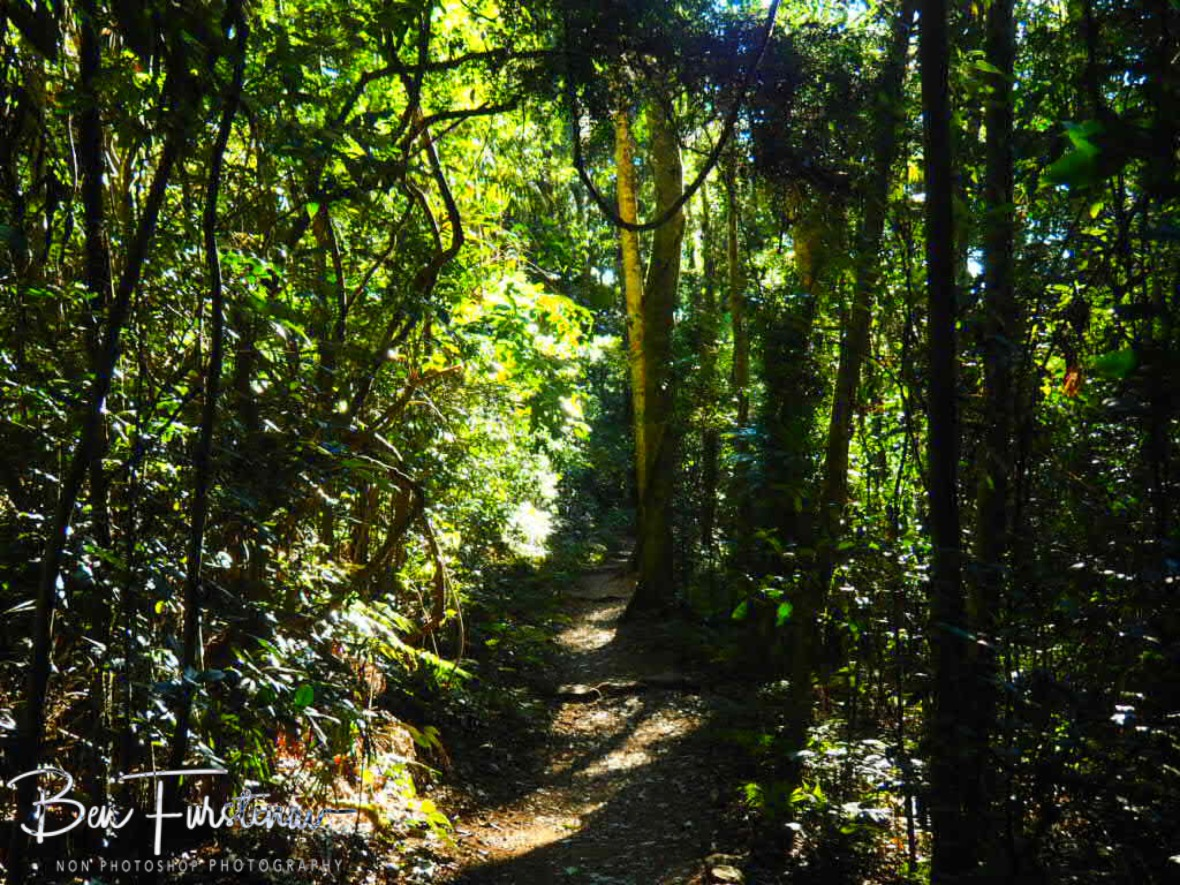 Popular hiking trail at Lamington National Park, Queensland, Australia