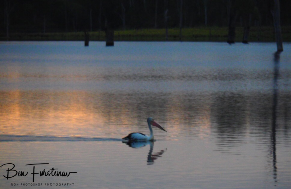 Pelican sunset cruise at Lake Somerset, Queensland, Australia