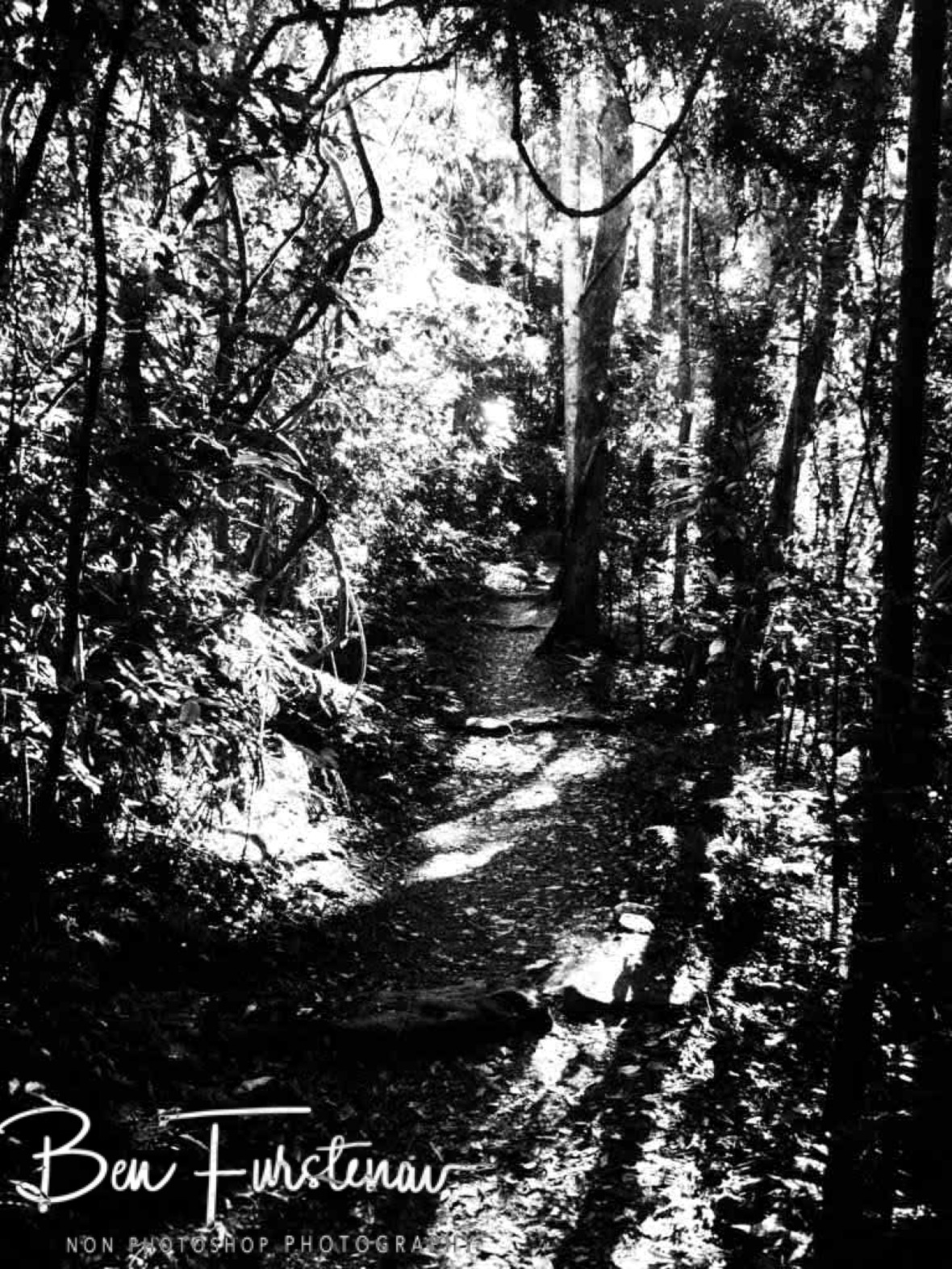 Long shadows in black and white at Lamington National Park, Queensland, Australia