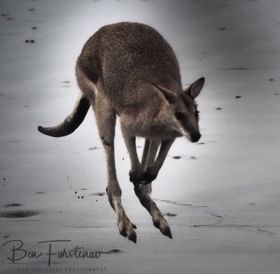 Follow me, Cape Hillsborough, Queensland, Australia