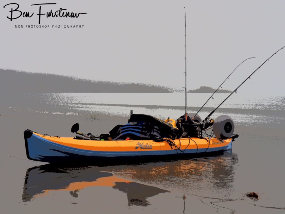 Early morning yak reflections at Cape Hillsborough, Queensland, Australia