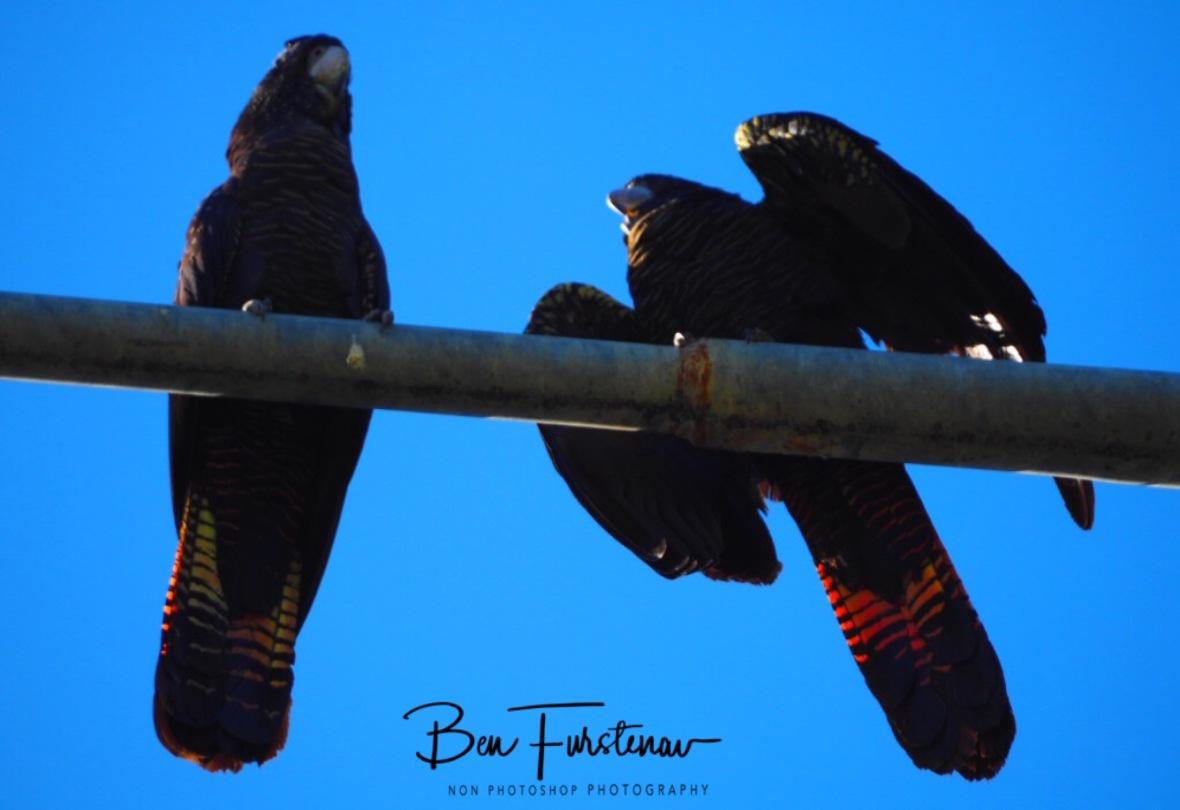 Scared offspring in Townsville, Queensland, Australia