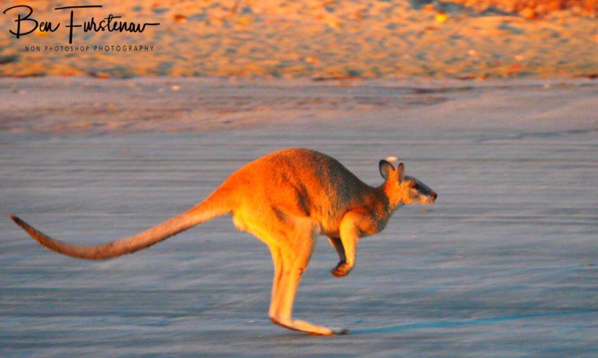 Fast shutter speed at Cape Hillsborough, Queensland, Australia