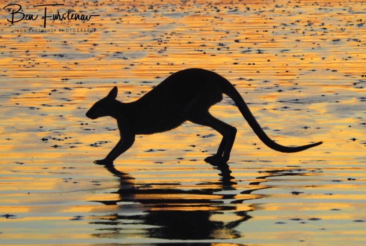 Silhouette and shadows at Cape Hillsborough, Queensland, Australia
