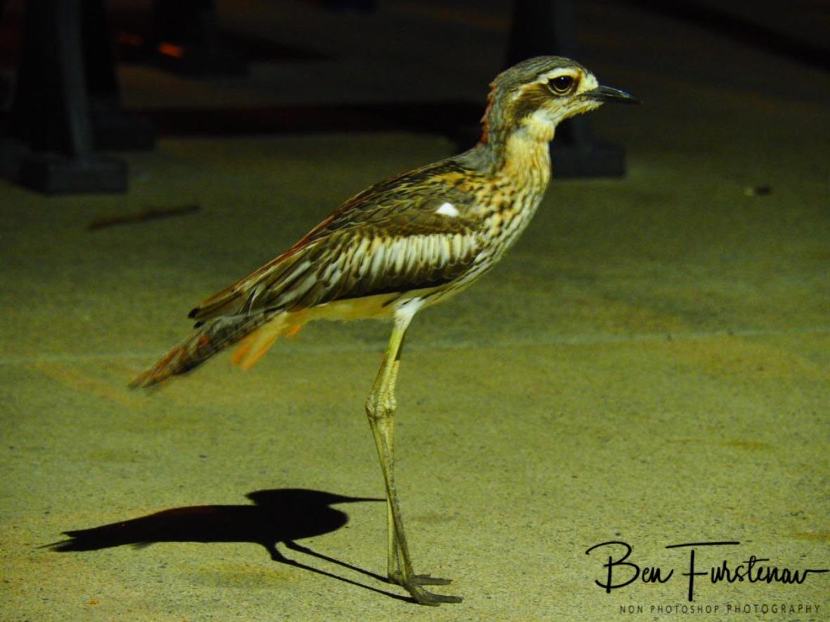 Park night warden at Townsville, Queensland, Australia