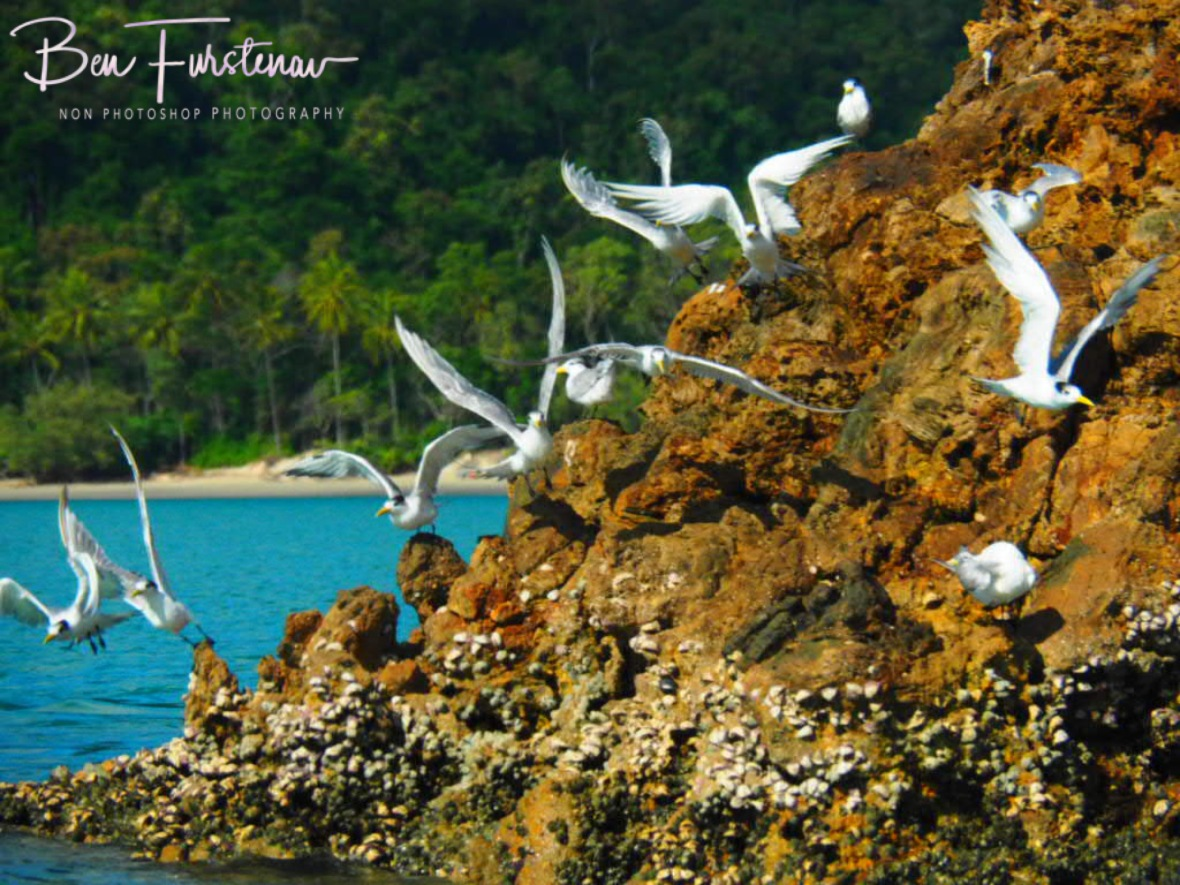 Terns prefer structure to ready and chase baitfish at Cape Hillsborough, Queensland, Australia