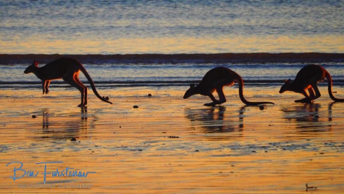 In step, March! Cape Hillsborough, Queensland, Australia