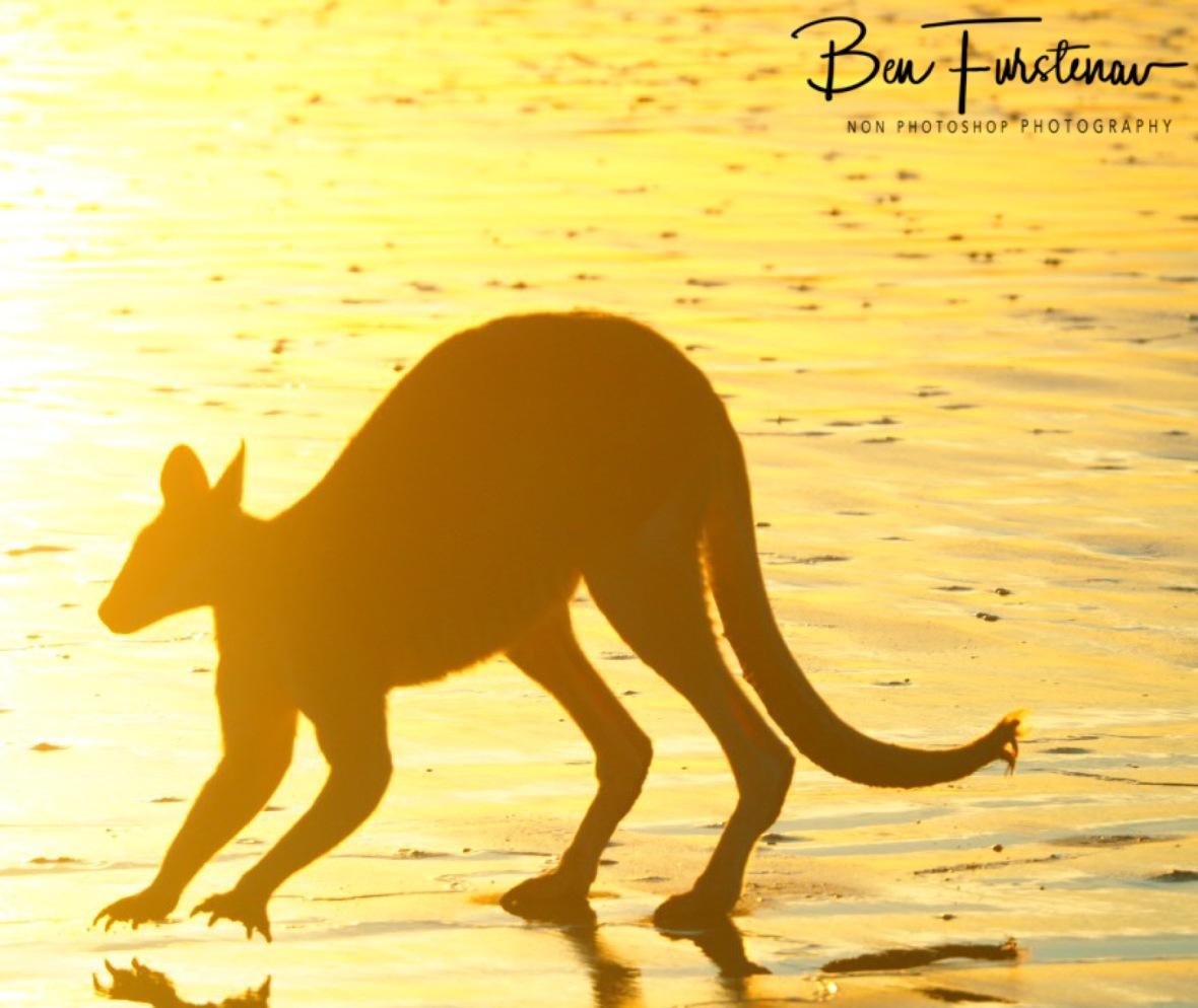 Light factor at Cape Hillsborough, Queensland, Australia
