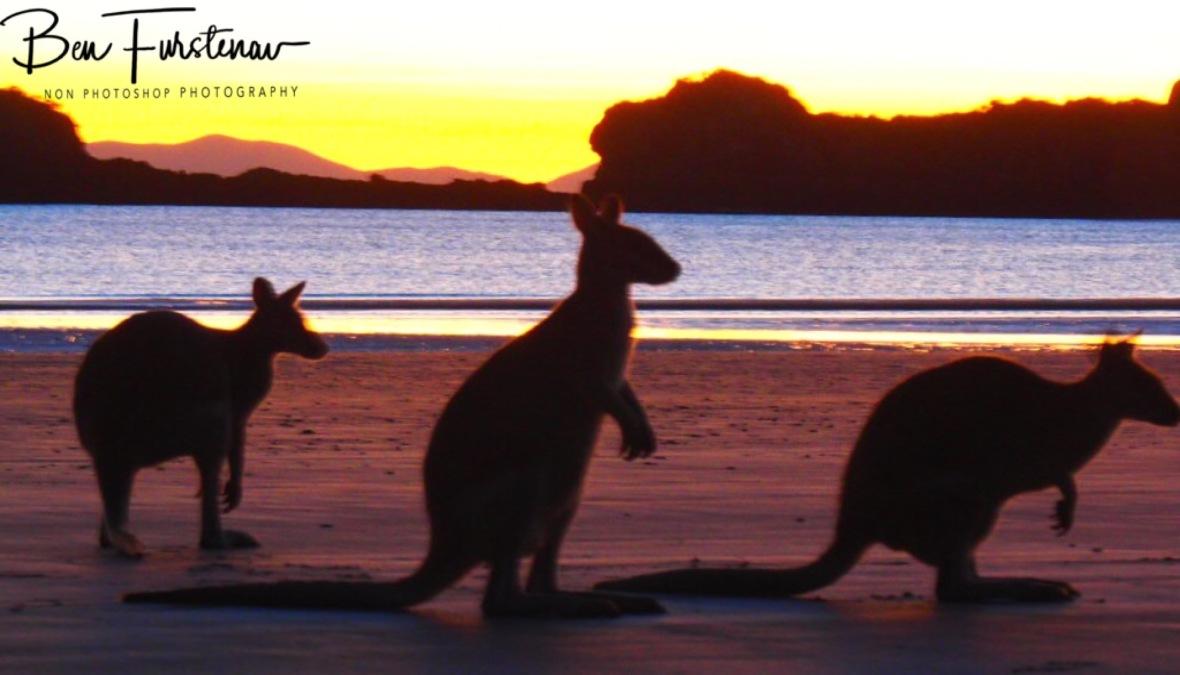 Sunrise goers at Cape Hillsborough, Queensland, Australia