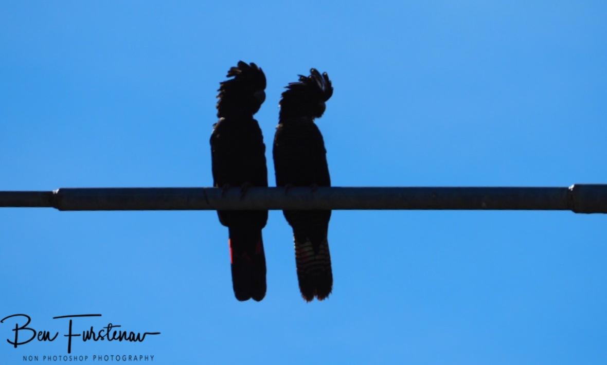 Overlooking their kingdom in Townsville, Queensland, Australia