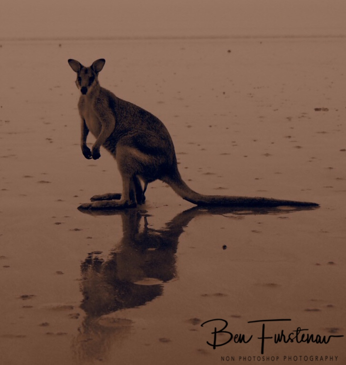 Wet beach reflections in sepia at Cape Hillsborough, Queensland, Australia