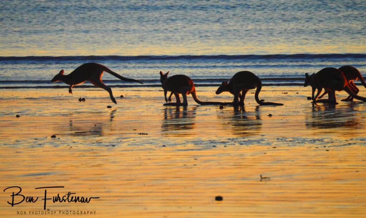 Let's move it, Cape Hillsborough, Queensland, Australia