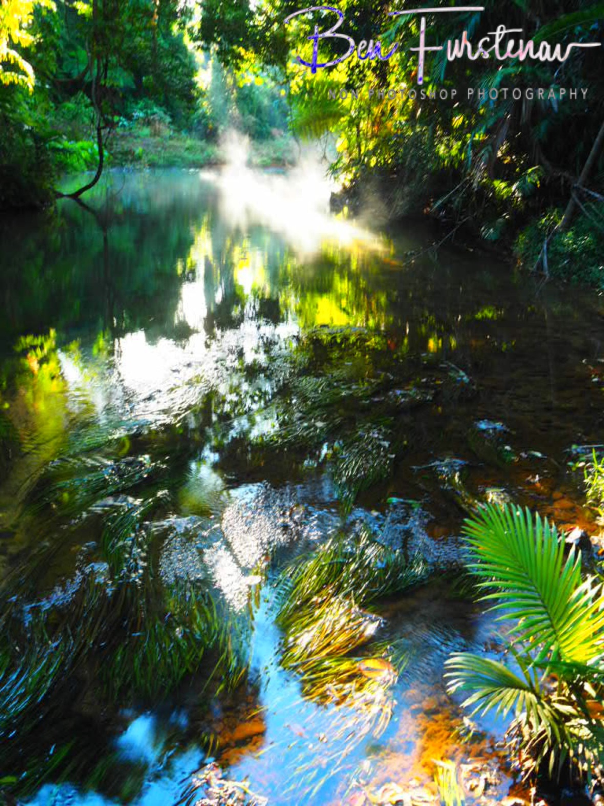 Underwater plants rock gently to the creek's rhythms at Mission Beach, Tropical Queensland, Australia