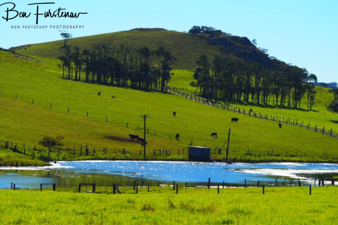 Dairy paradise in Atherton Tablelands, Far North Queensland, Australia