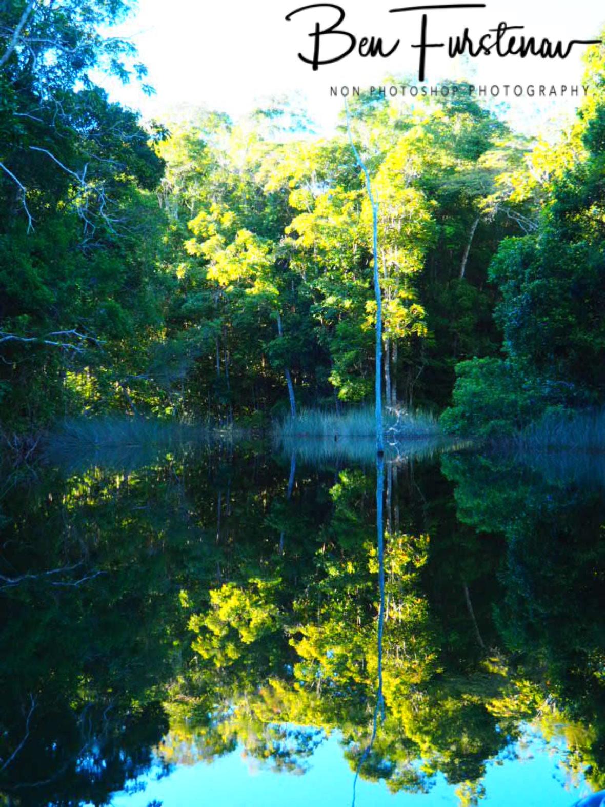 Tree reflections on Lake Paluma, Northern Queensland, Australia