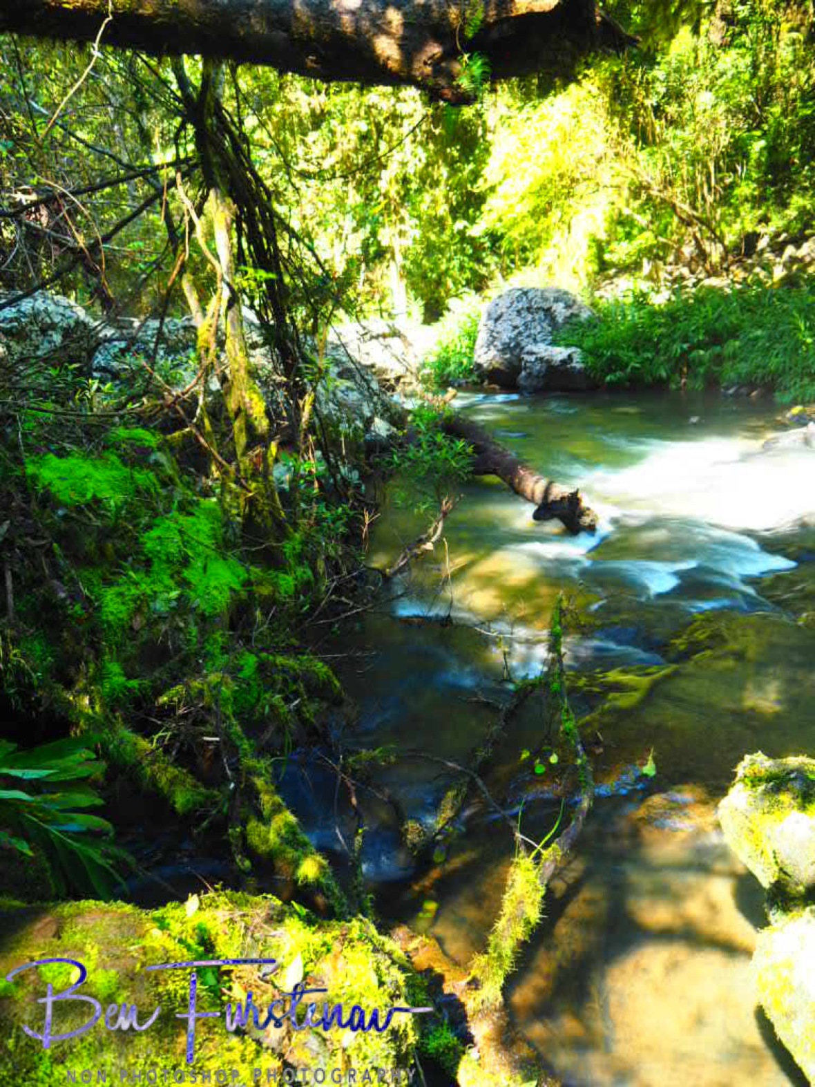 Theresa Creek flowing along, Atherton Tablelands, Far North Queensland, Australia