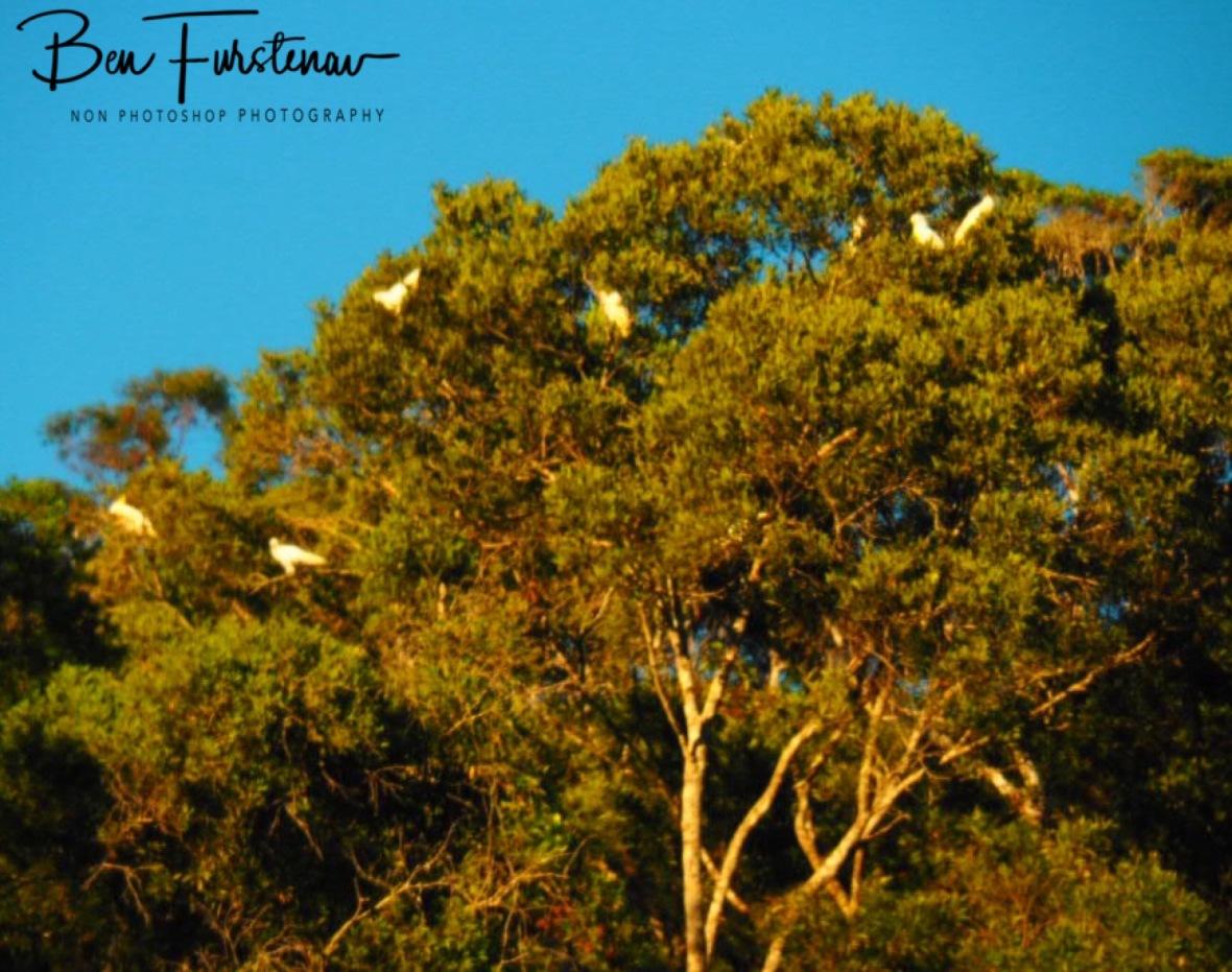 Early morning entertainment at Lake Paluma, Northern Queensland, Australia