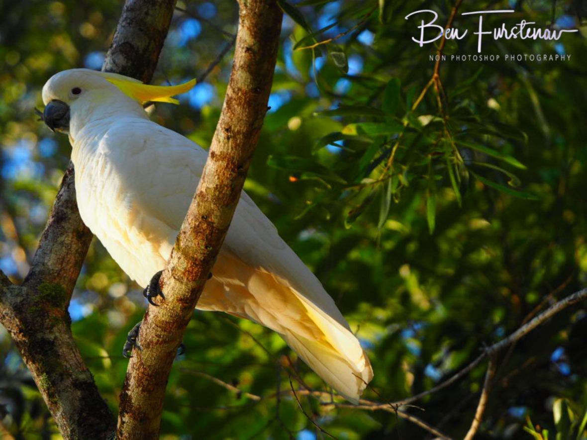 Enjoying his view at Lake Paluma, Northern Queensland, Australia