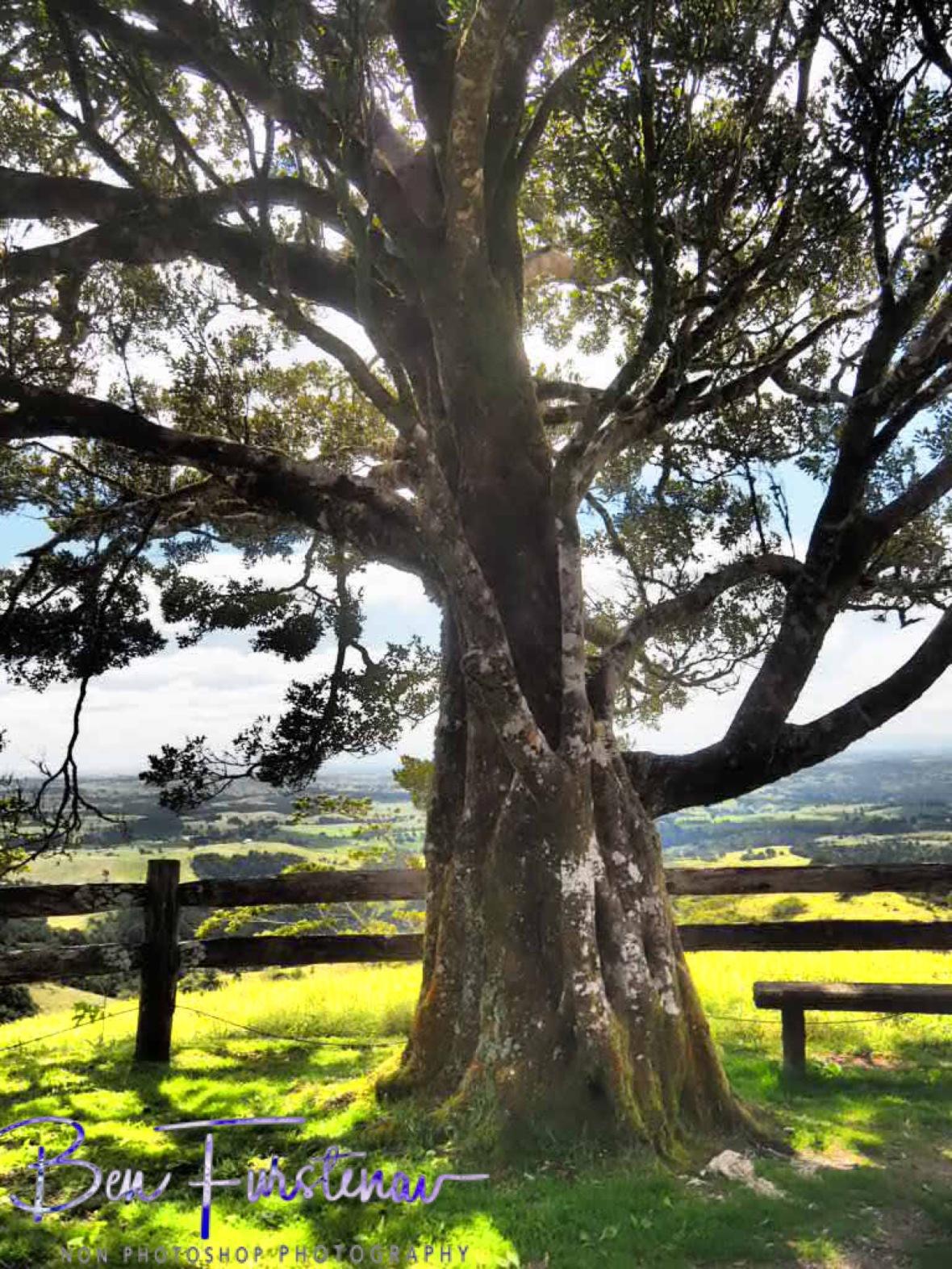 Lookout point near Millaa Millaa township, Atherton Tablelands, Far North Queensland, Australia
