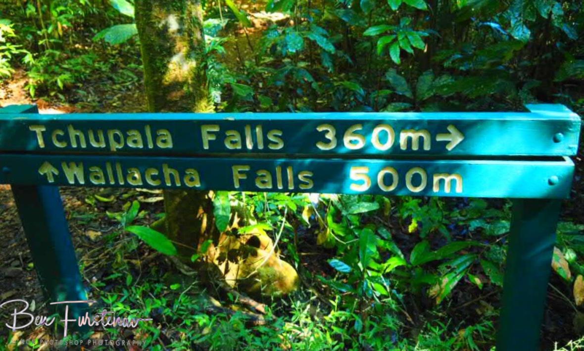 Track division at Tchupala and Wallacha Falls, Atherton Tablelands, Far North Queensland, Australia