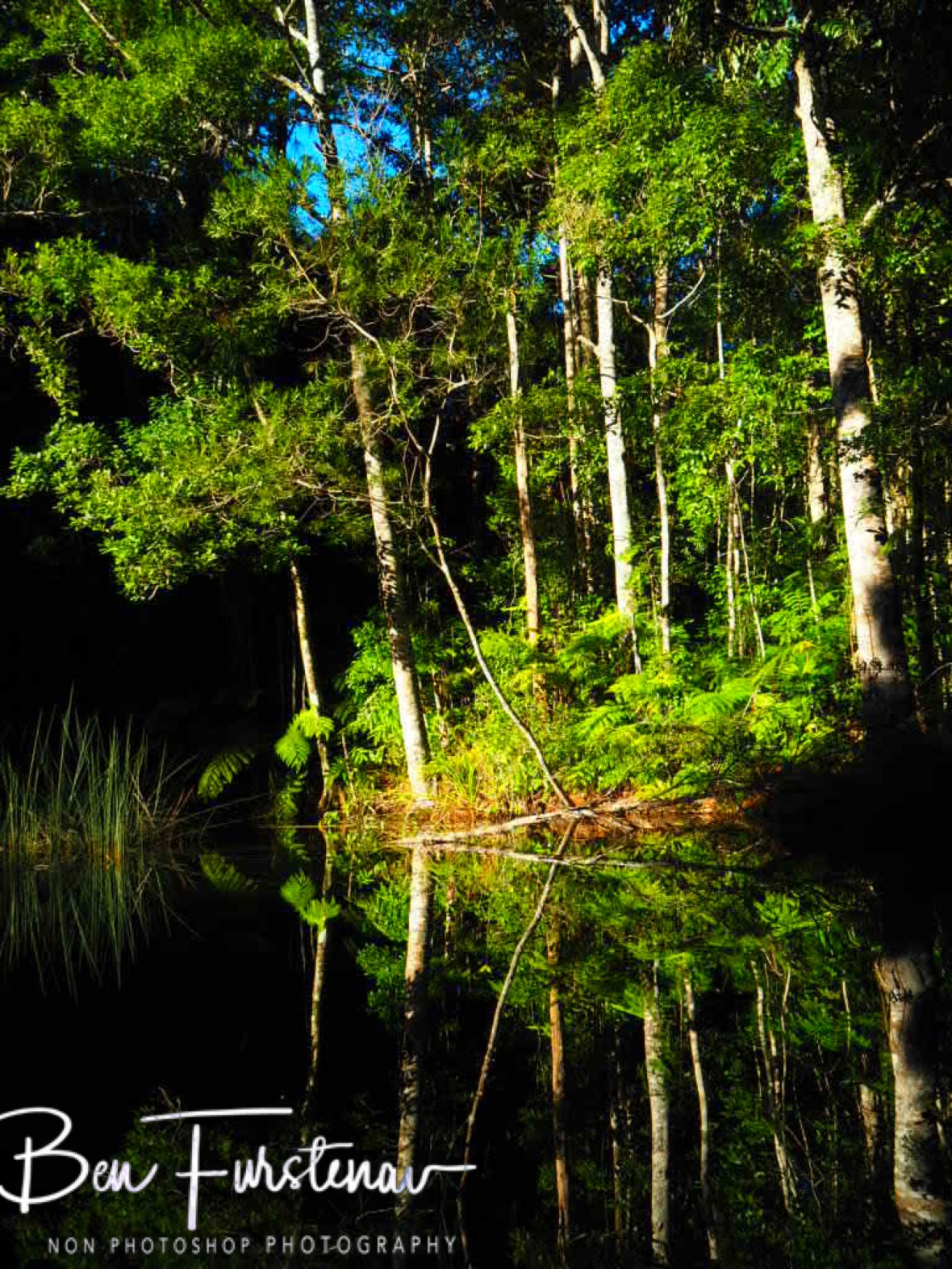 No birds seen, plenty heard at Lake Paluma, Northern Queensland, Australia