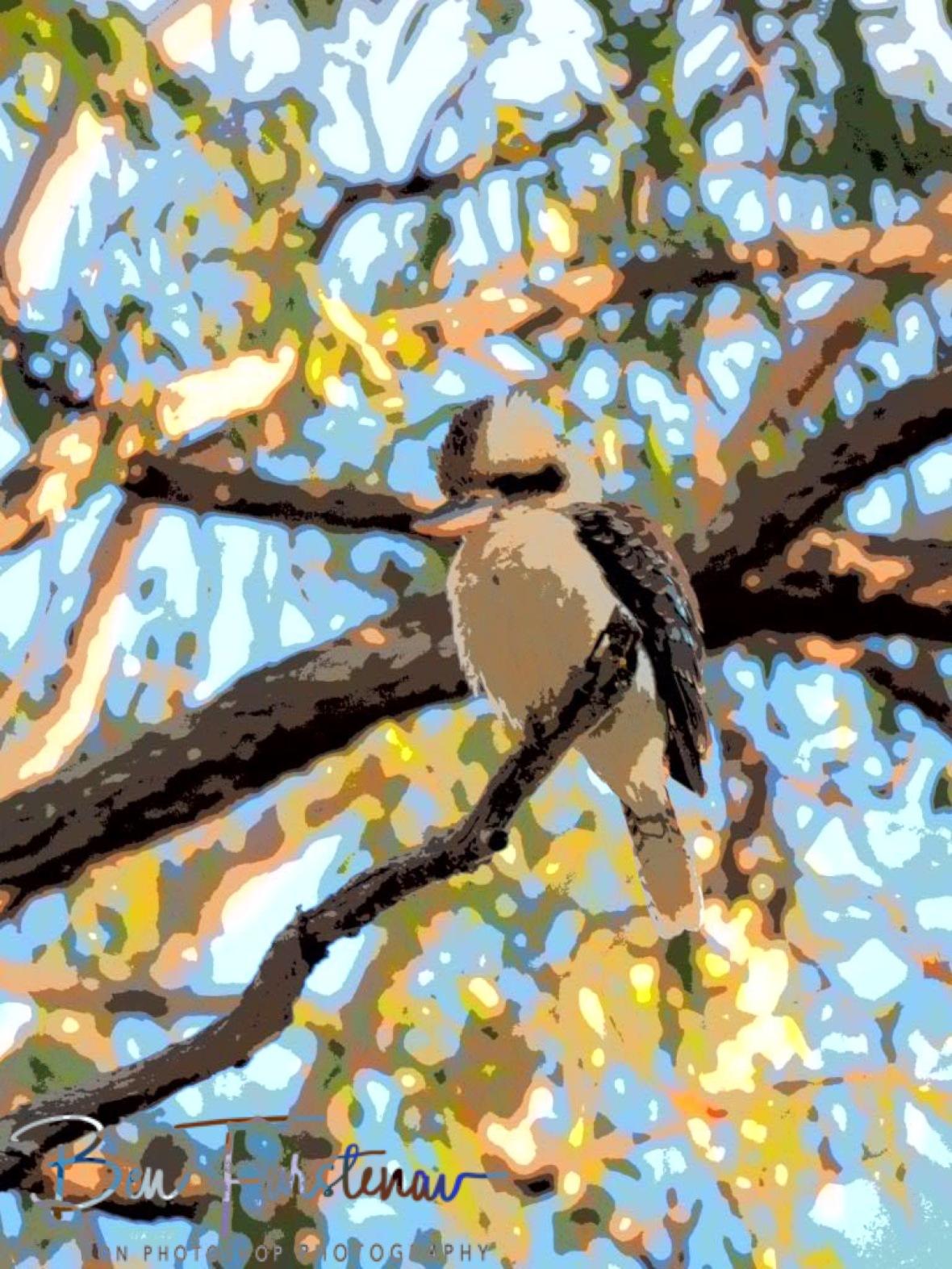Kookaburra in painting, Atherton Tablelands, Far North Queensland, Australia