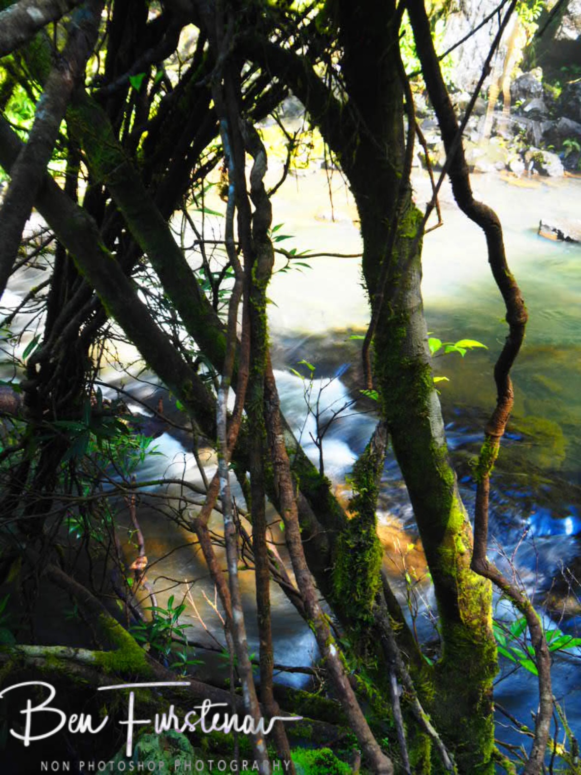 Mossy and slippery conditions, Atherton Tablelands, Far North Queensland, Australia