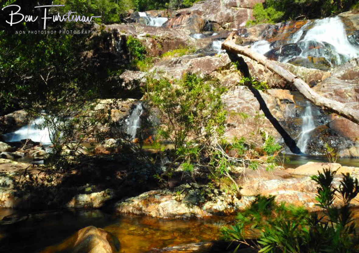Natural decorations at Birthday Creek Falls, Northern Queensland, Australia