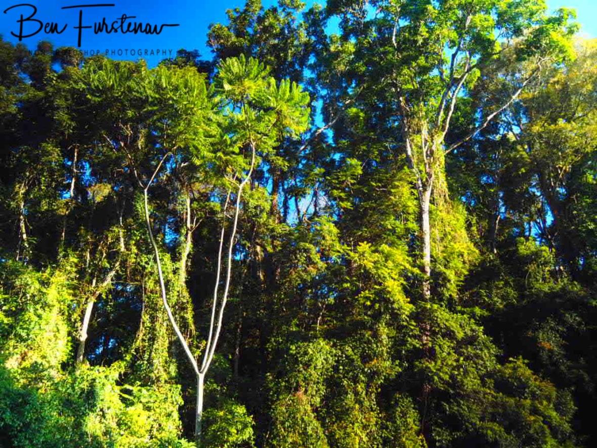 Botanical diversity at Atherton Tablelands, Far North Queensland, Australia