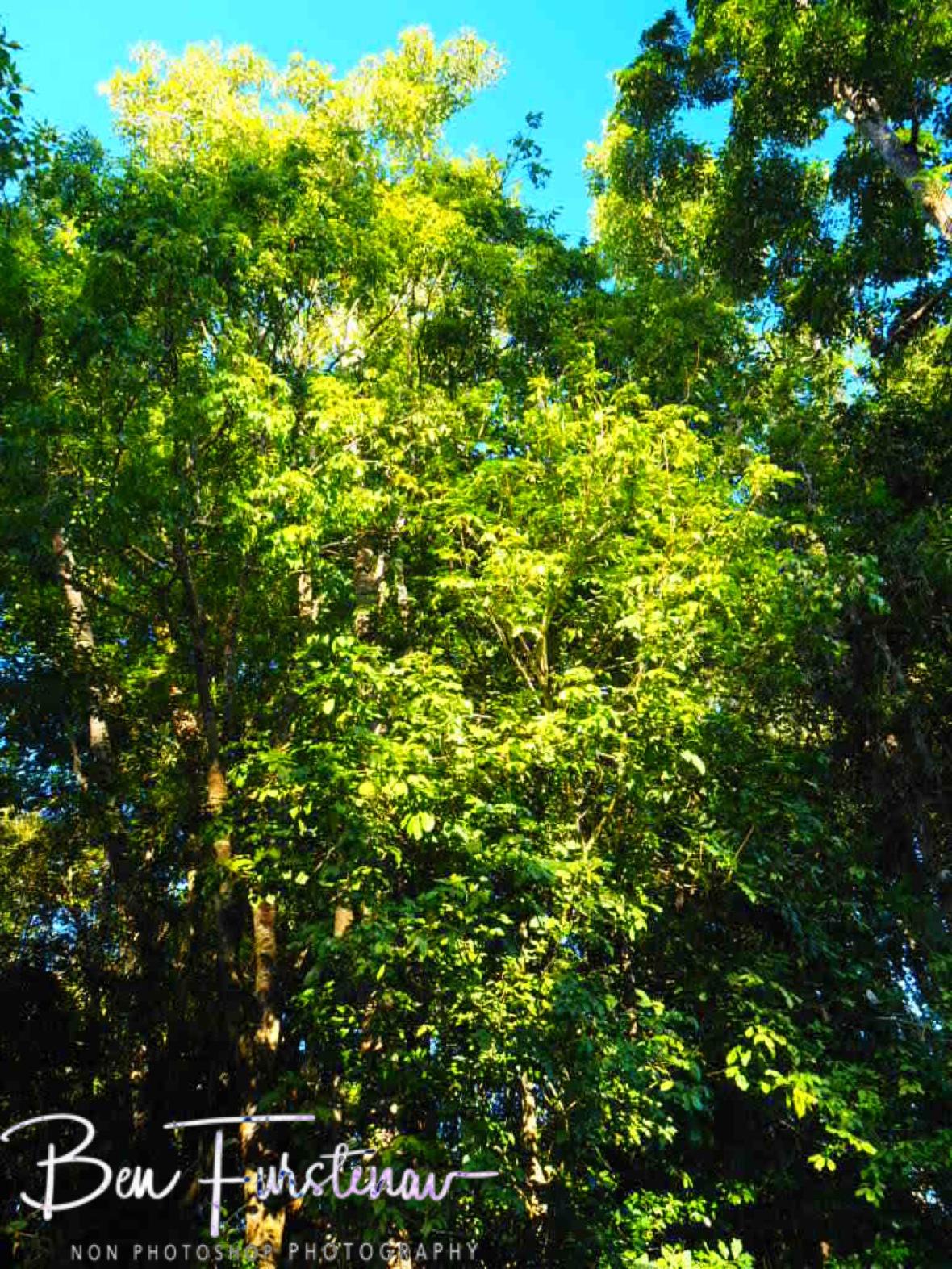 Less environmental impact, Atherton Tablelands, Far North Queensland, Australia