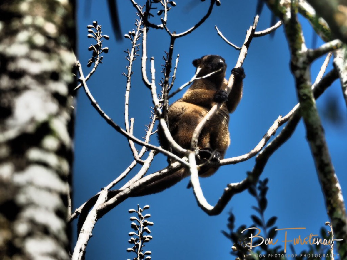 Hopeful to see a tree kangaroo at Atherton Tablelands, Far North Queensland, Australia