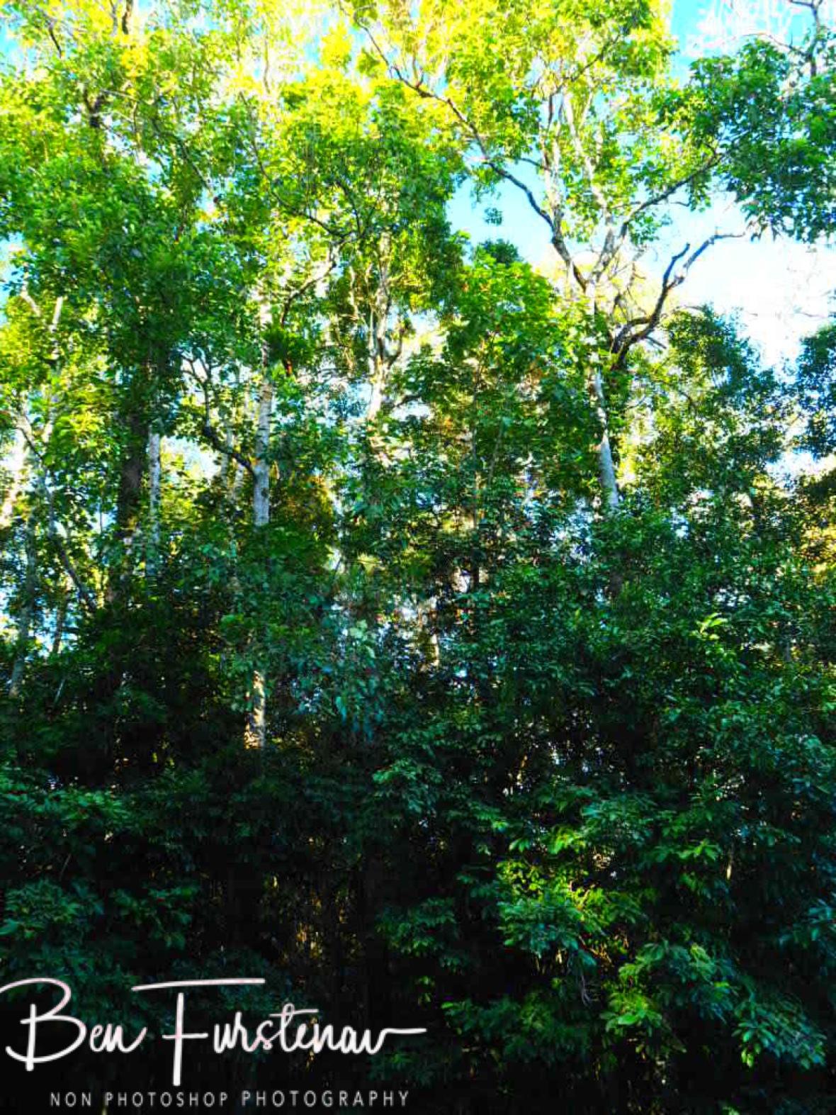 No way through Mabi forest st Atherton Tablelands, Far North Queensland, Australia