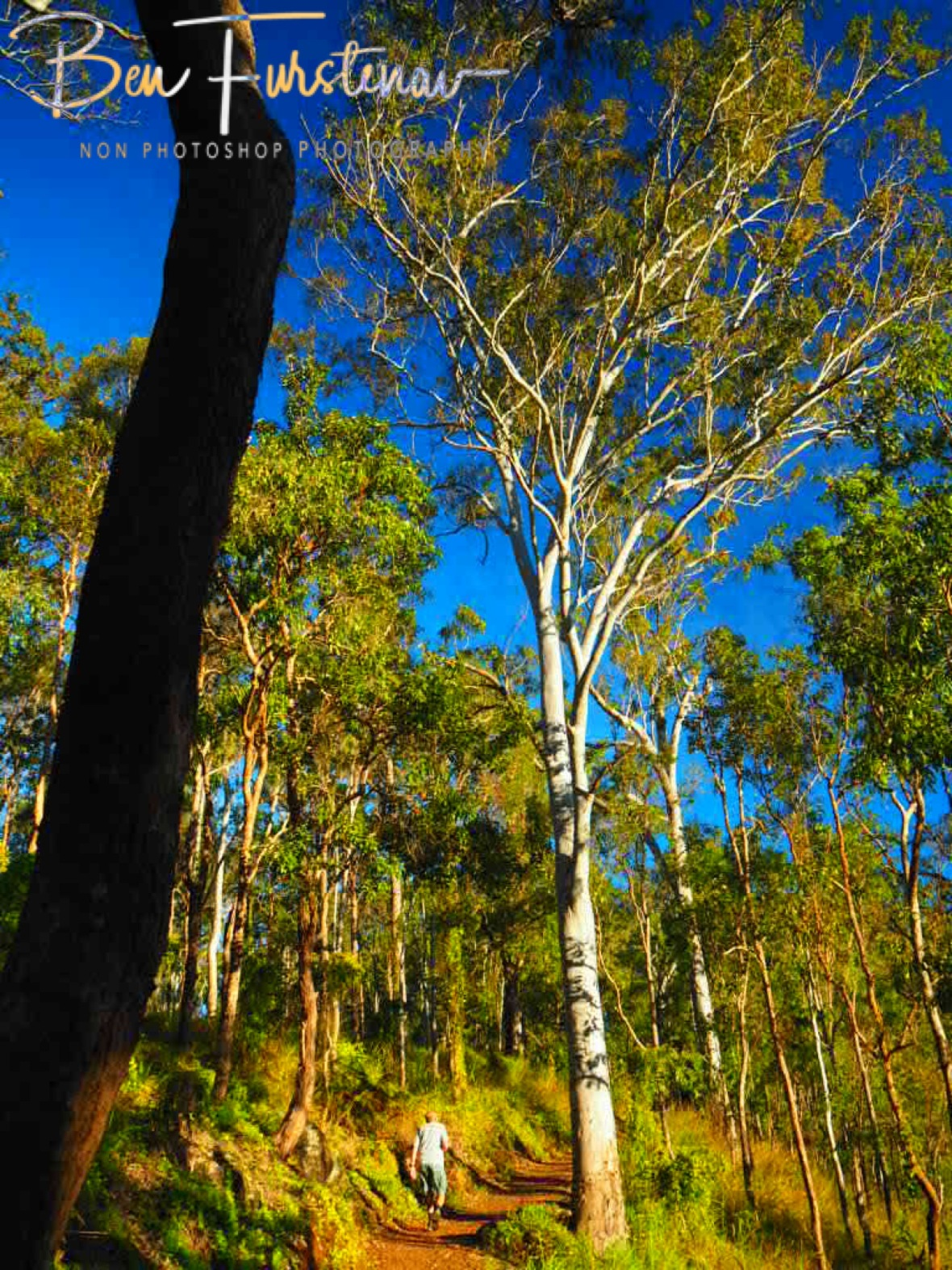 Strolling through green, brown and blue at Atherton Tablelands, Far North Queensland, Australia