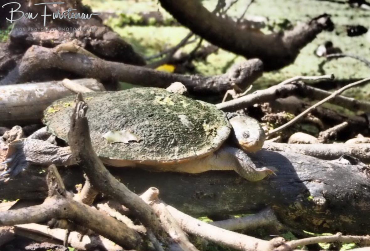 Rest at its best at Atherton Tablelands, Far North Queensland, Australia