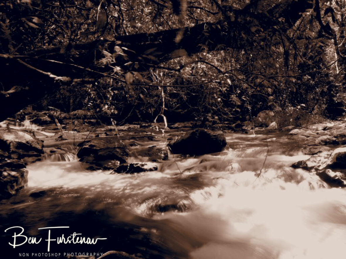 Jungle view in sepia at Atherton Tablelands, Far North Queensland, Australia