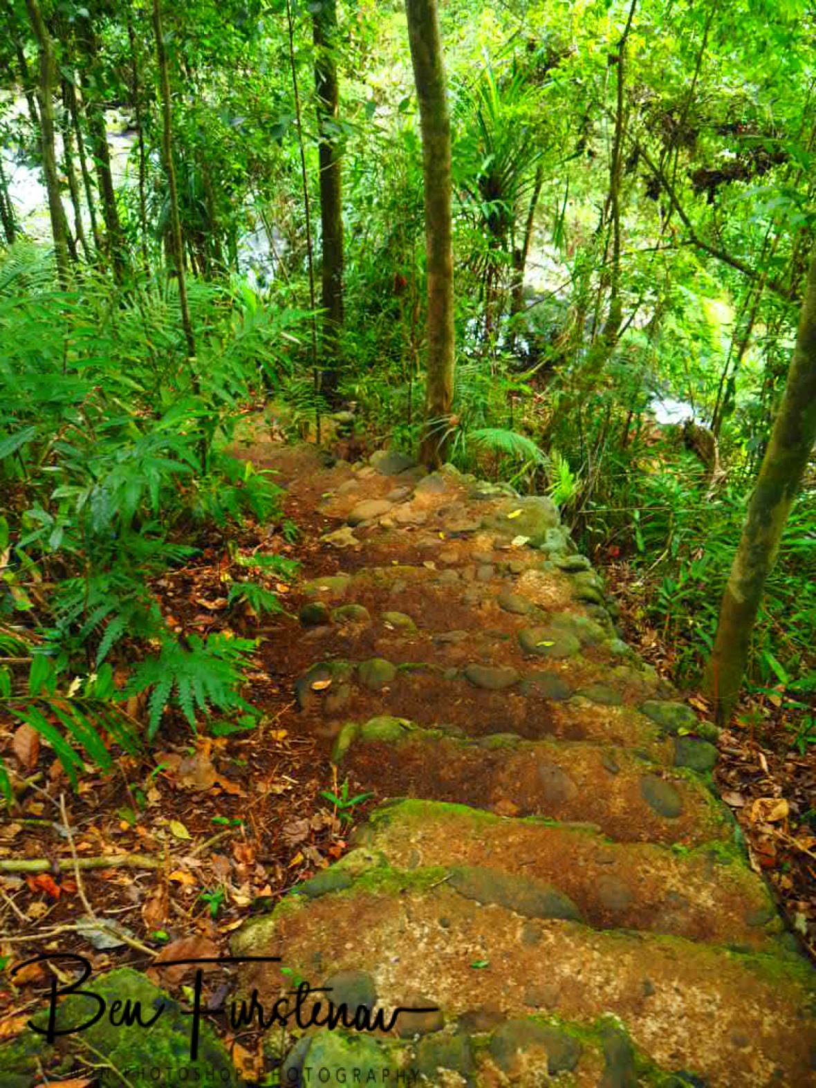 Downhill track to the Souita Falls at Atherton Tablelands, Far North Queensland, Australia