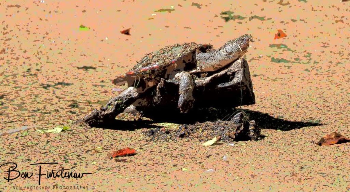 Priceless, Atherton Tablelands, Far North Queensland, Australia