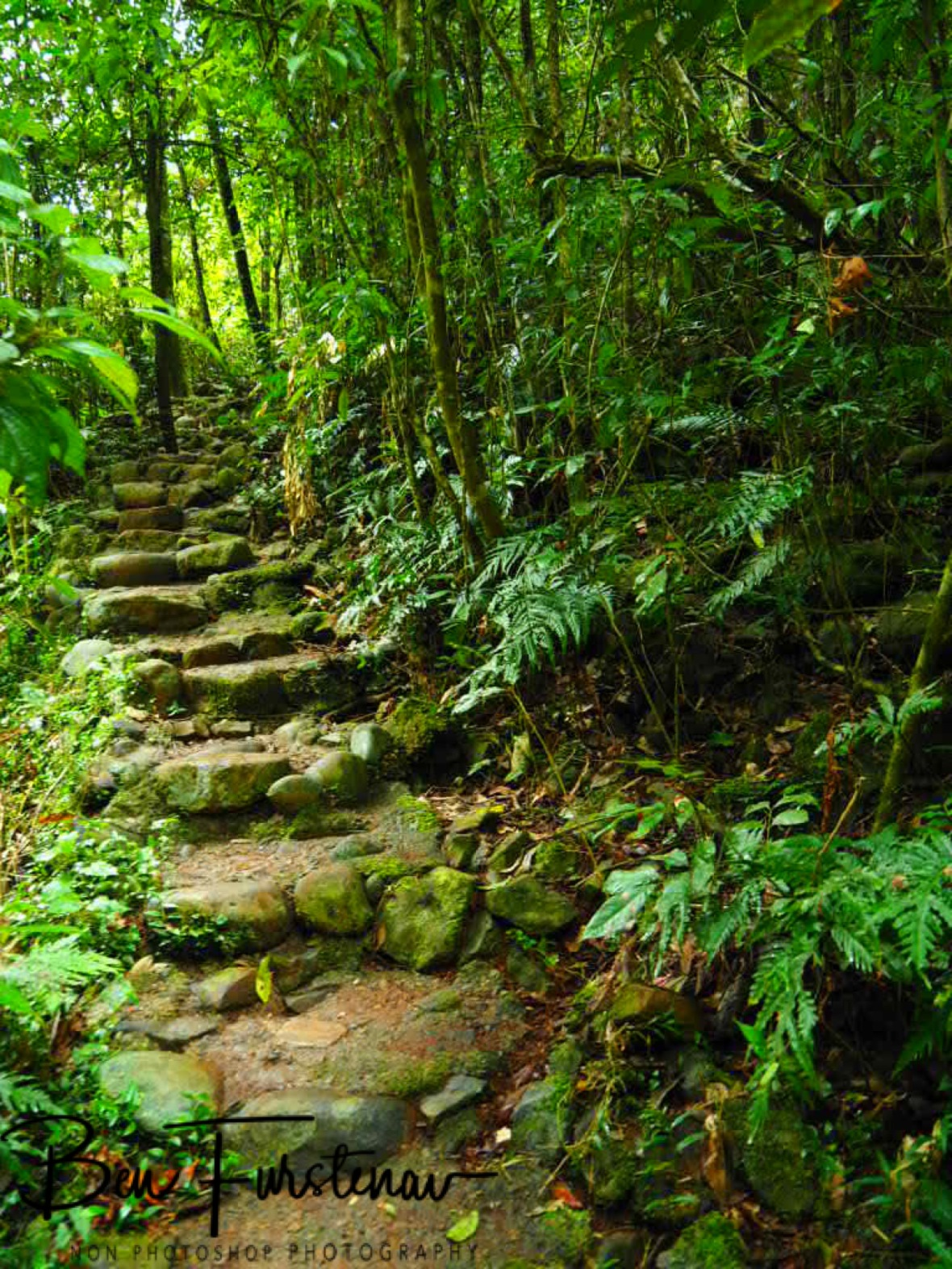 Natural hiking trail at Atherton Tablelands, Far North Queensland, Australia