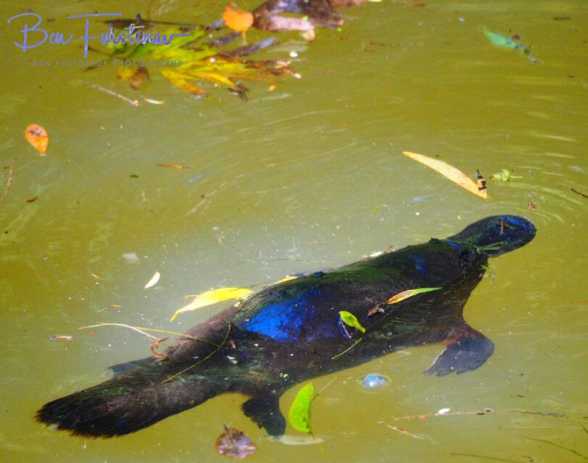 Wash-off at Paterson Creek, Yungaburra, Atherton Tablelands, Far North Queensland, Australia