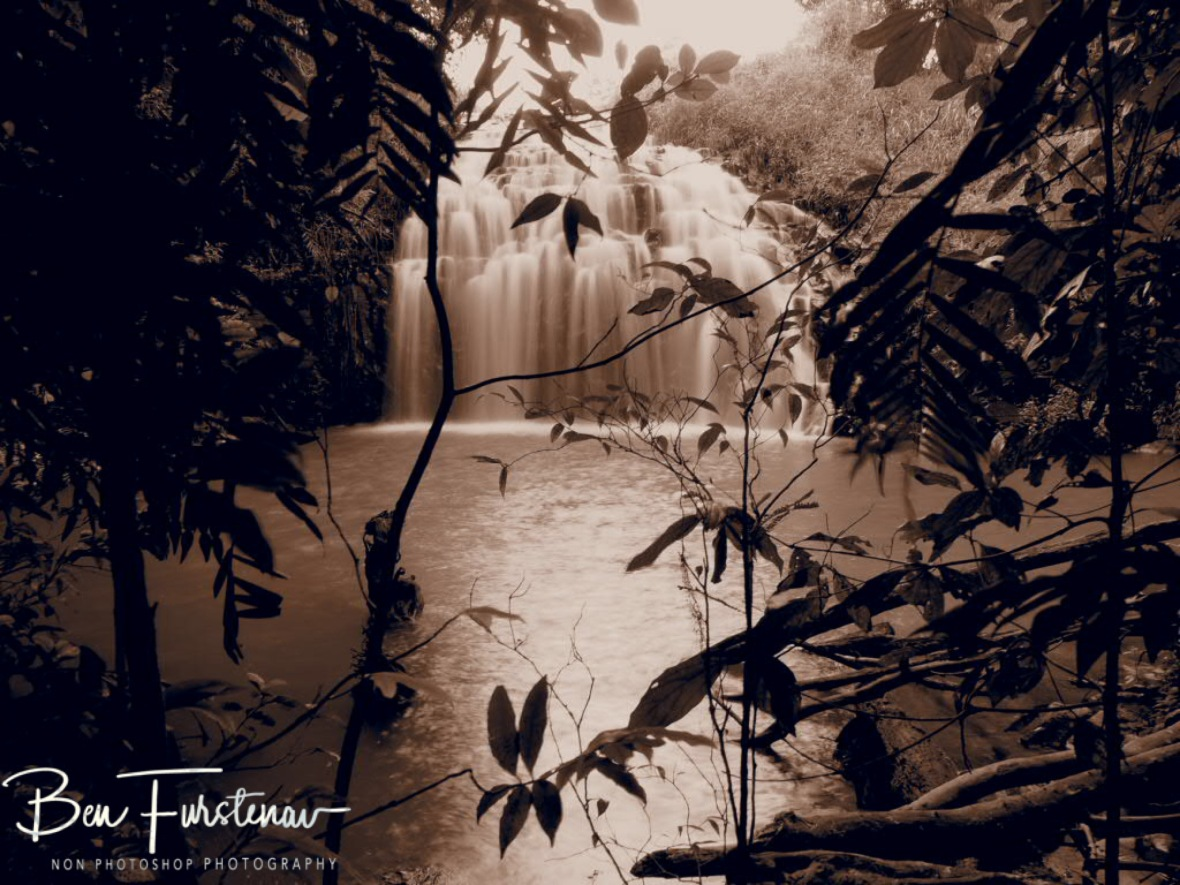 Jungle around Pepina Falls at Atherton Tablelands, Far North Queensland, Australia