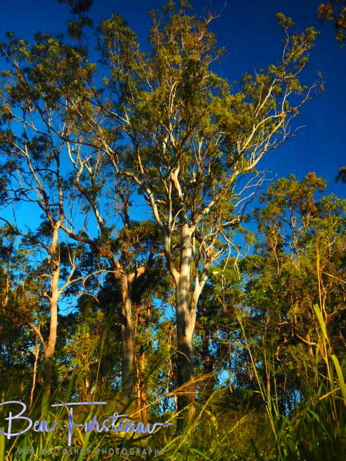 Rich in colours, Atherton Tablelands, Far North Queensland, Australia