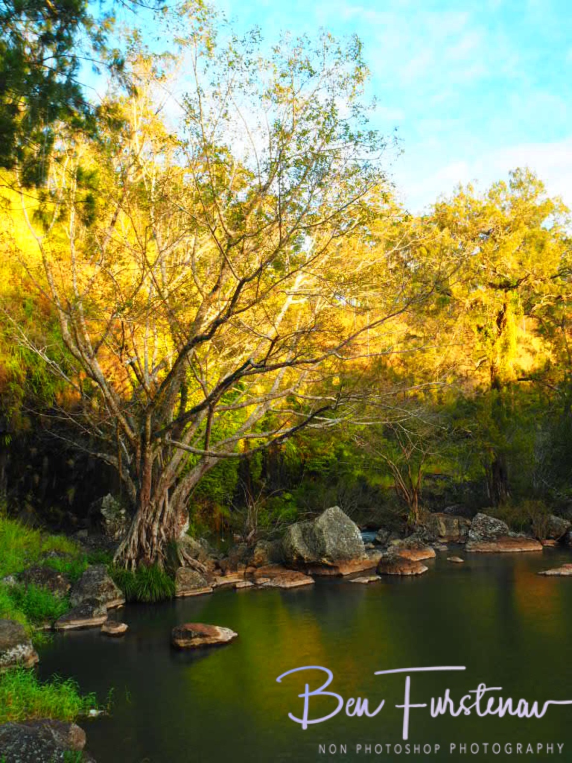 Golden colours with setting sun, Atherton Tablelands, Far North Queensland, Australia