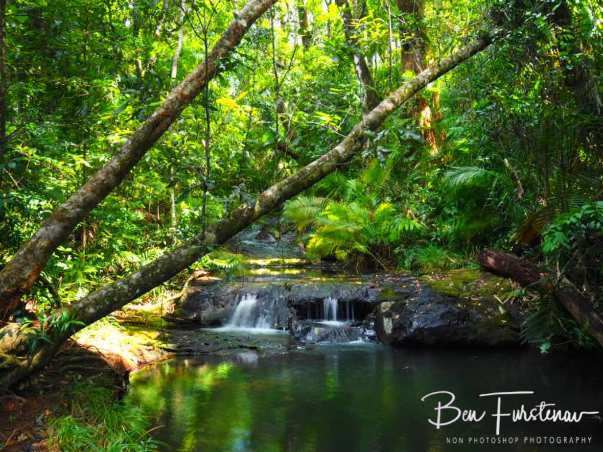 Streaming towards Tully Gorge at Atherton Tablelands, far North Queensland, Australia